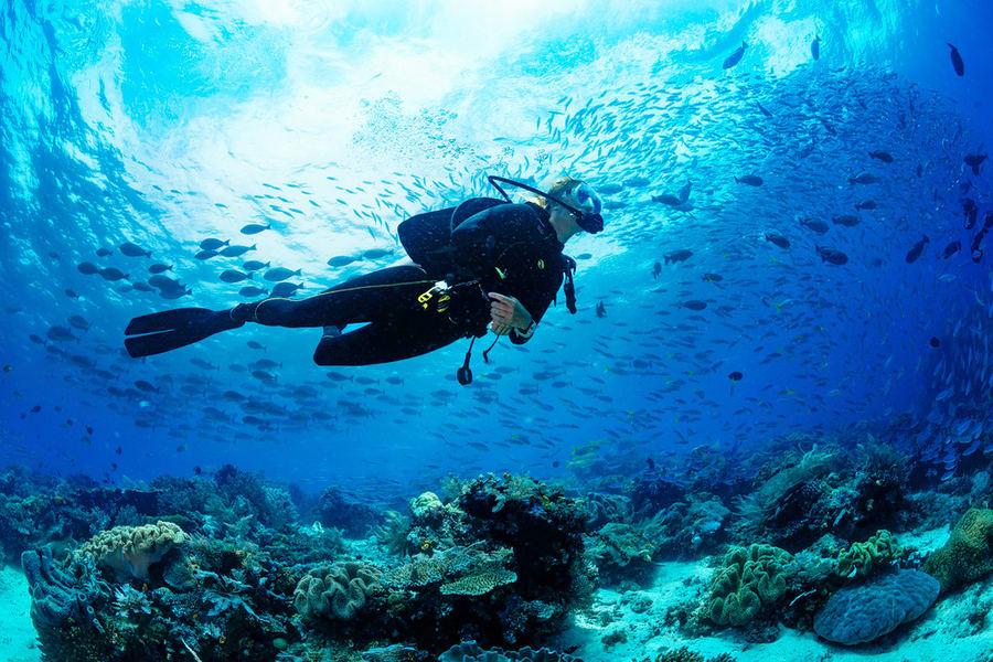 Scuba Diving In Dubai Image