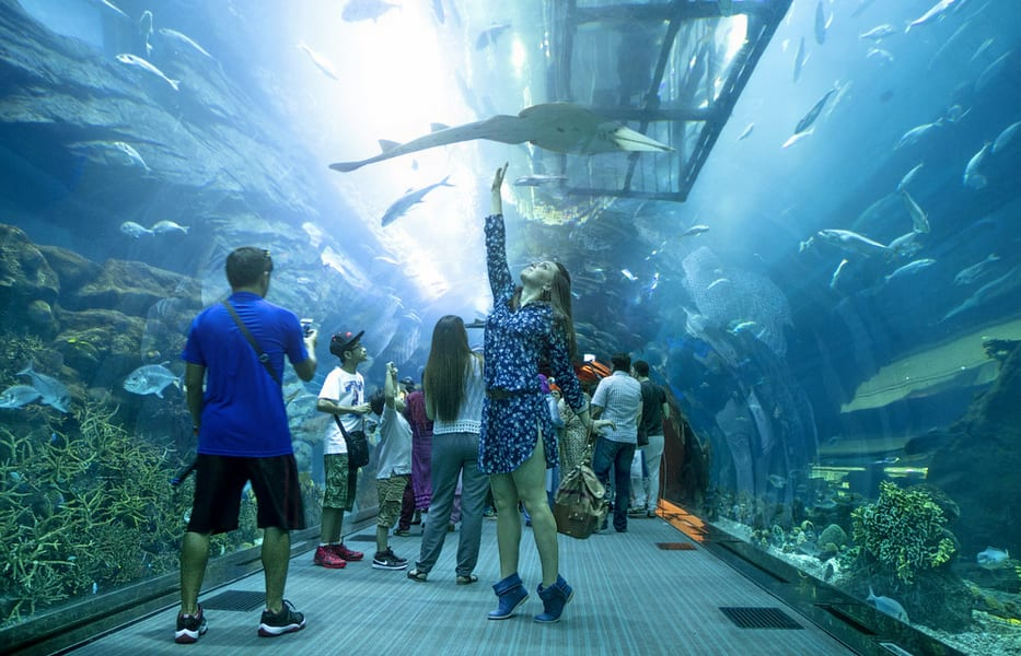 Dubai Aquarium & Underwater Zoo Tickets Image