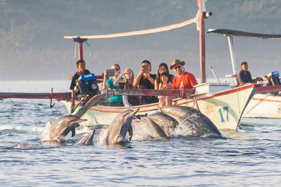 Bali Lovina Dolphin Watching With Sightseeing Image