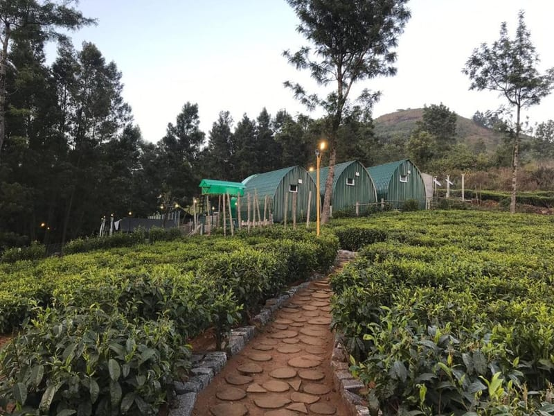 An Adventure Getaway into the Woods of Ooty Image