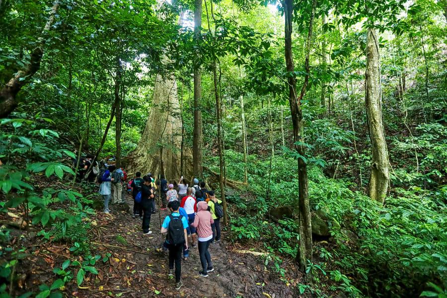 Day Trek To Jogini Waterfalls  Image