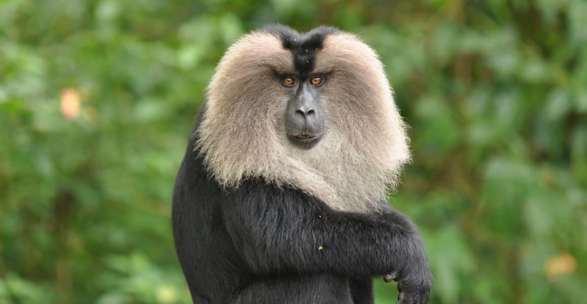 Brahmagiri Wildlife Sanctuary Safari Image