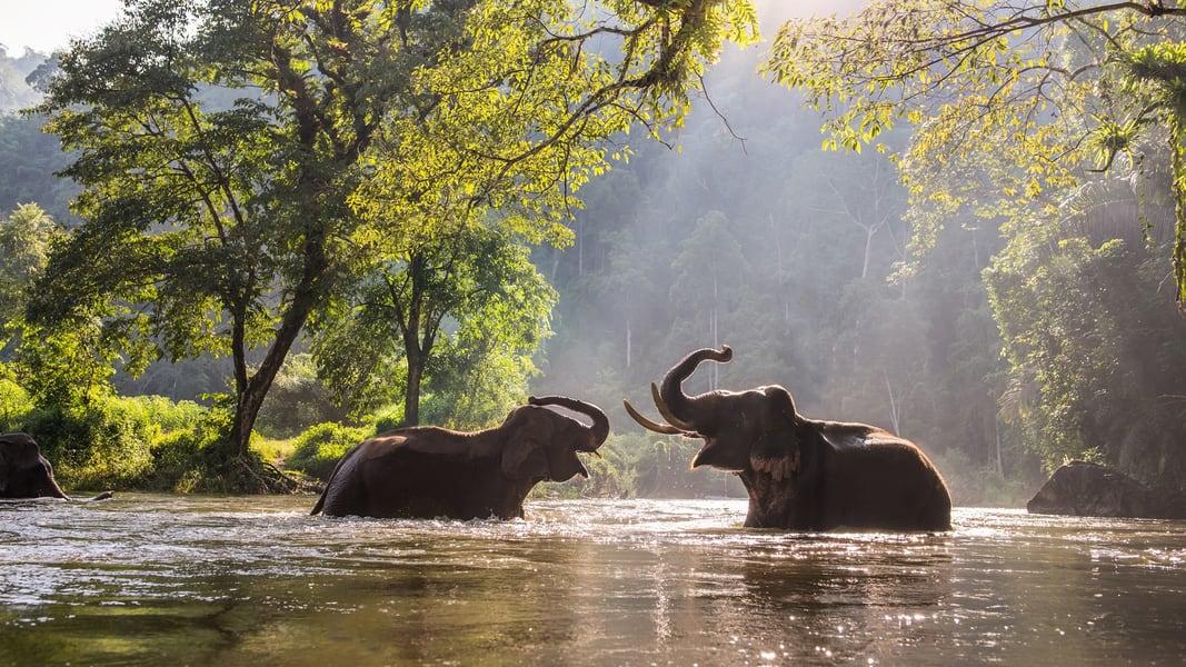 Phuket Elephant Jungle Sanctuary Image
