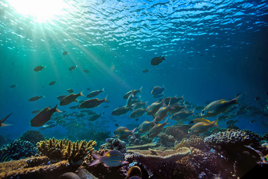 Scuba Diving In Gokarna Image
