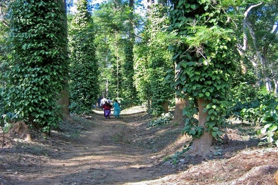 Coorg Coffee Plantation Tour Image