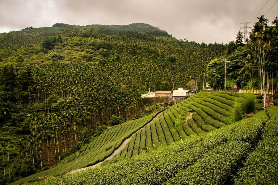 Pune to Ooty Tour Package Image