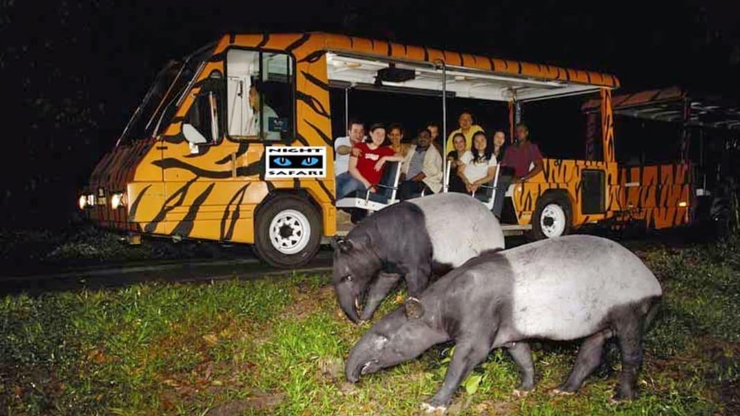 Night Safari In Bali Image