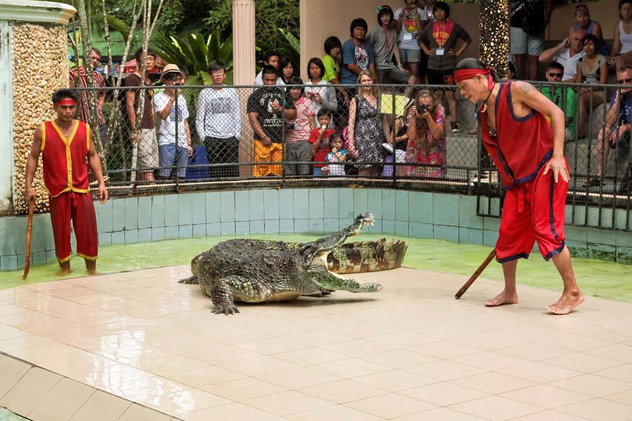 Crocodile Show Porosus Admission Ticket in Phuket Image