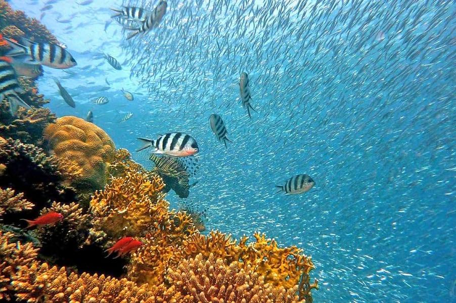 Scuba Diving in Kuta, Bali Image