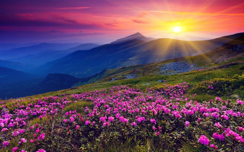 Valley of Flowers Trek Image