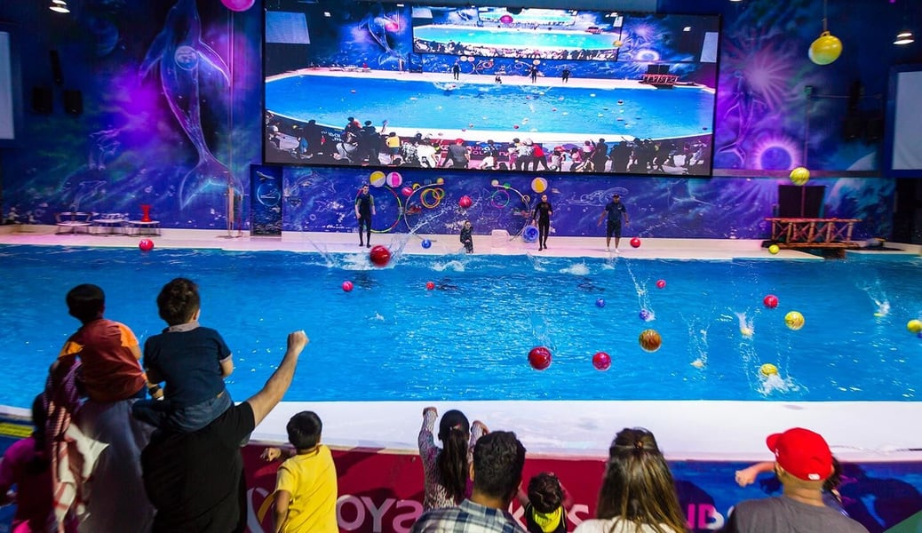 Dolphin Show Dubai Tickets Image