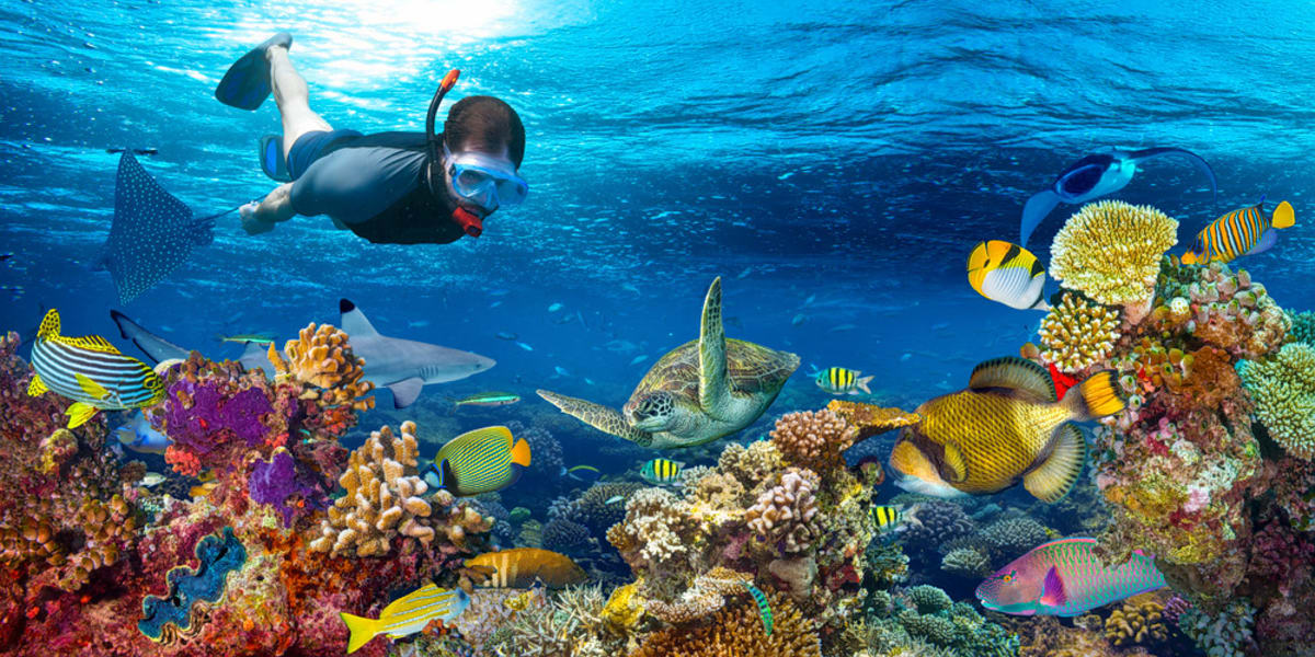Snorkeling In Sanur Image