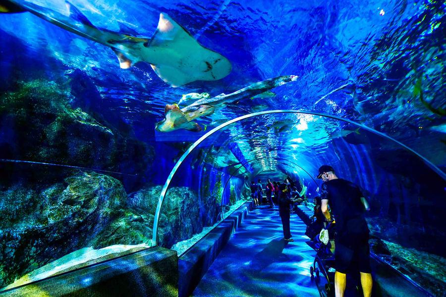 Sea Life Bangkok Ocean World Tickets Image