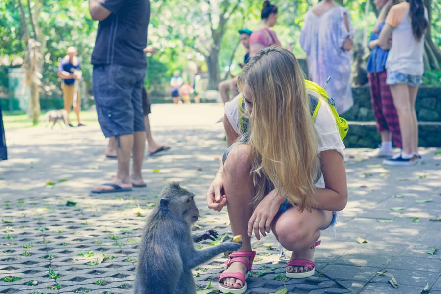 Monkey Forest and Ubud Sightseeing Tour in Bali Image
