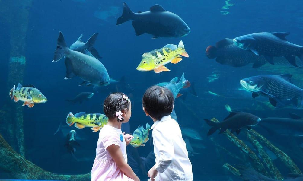 Aquaria Phuket Tickets Image