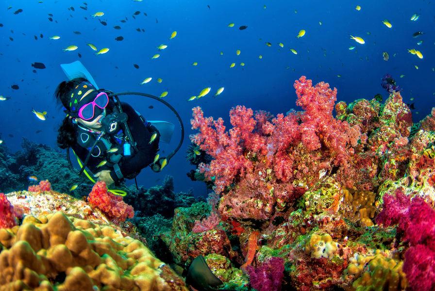 Tulamben Wreck Diving Day Trip Image