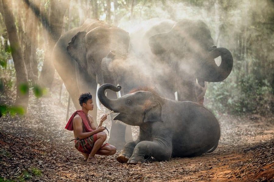 Elephant Safari Park Tickets Image