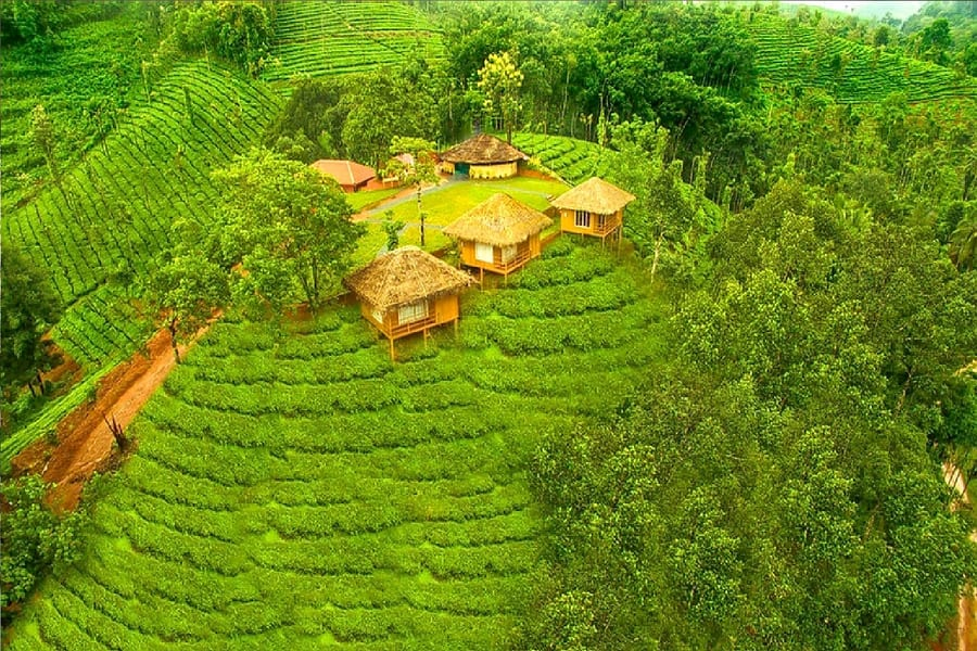 A quiet hideaway amidst the lush outdoors of Wayanad Image