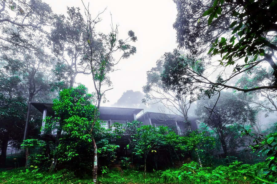 Wayanad Wild Resort Image