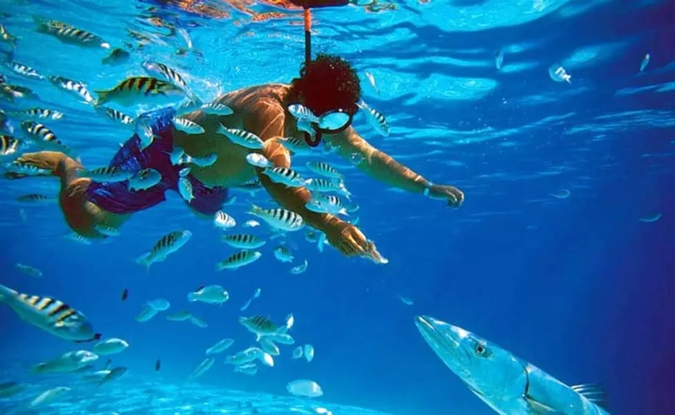 Grand Island Goa Tour With Snorkeling Image