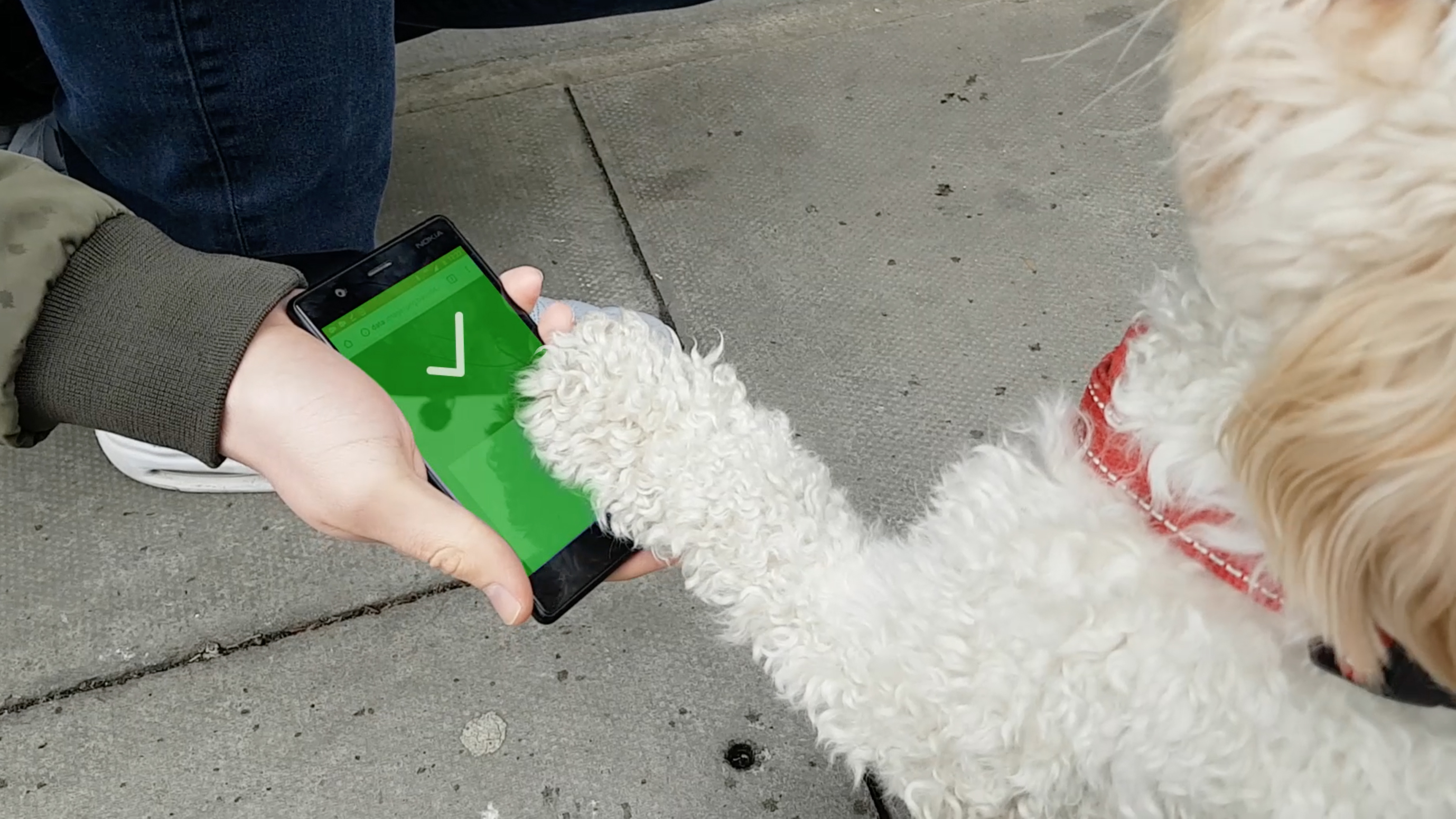 Event ticketing for dogs, by Ticket Tailor