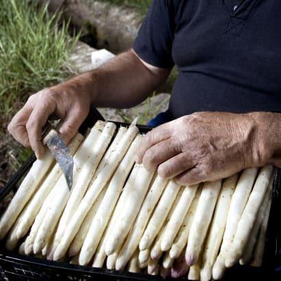 Thick White Asparagus Spears, D.O. Navarra