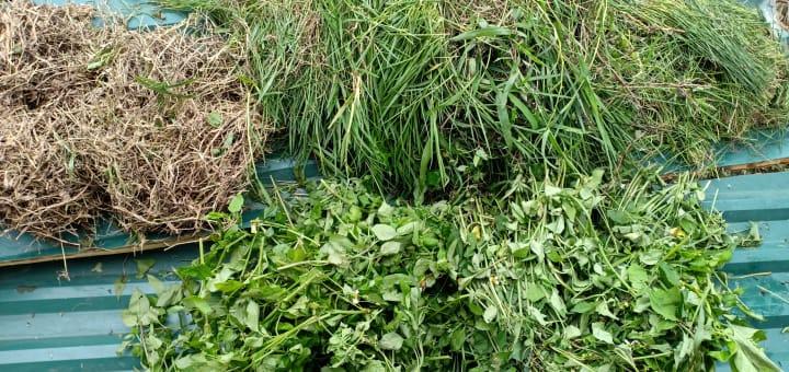 cỏ xanh Tiepz