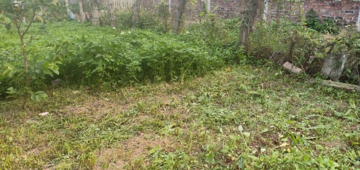 'Xanh xanh ngọn cỏ', tại trại thỏ Tiepz