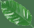 black leaf 2 | al paladar de los amantes del café, en cualquier lugar del mundo