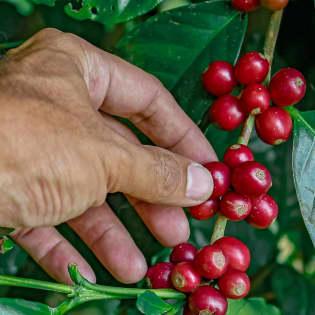 gallery 05 | Tierraviva está hecho de sonrisas. Nos mueve la idea de que los cafés especiales son un vehículo de felicidad; desde nuestros caficultores quienes reciben remuneración justa, hasta nuestros consumidores quienes disfrutan tazas increíbles