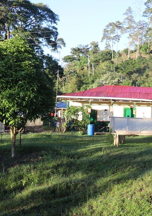 Payandé tolima 4   Café de Origen – Payandé - Tolima Variedad: Castillo Altura: 1.600 msnm Perfil de taza:Miel, panela, ciruela fresca Fragancia: Dulce floral Aroma:Afrutado