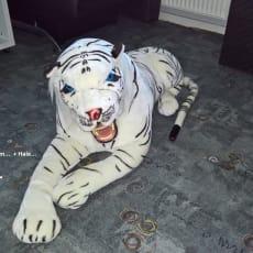 Tøj Tiger