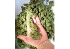 medicinsk marihuana, Marijuana, Cannabis, heroin