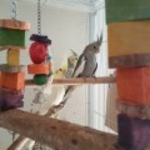 fugle unger