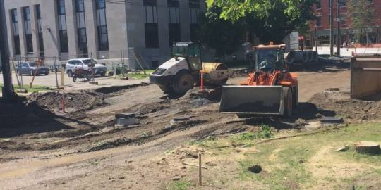 'It's disappointing': City of Fredericton proceeds with removal of five trees in Officers' Square