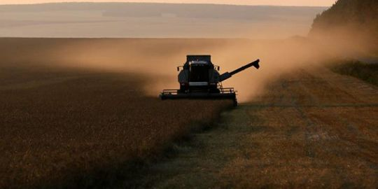 South Korea also stops importing Canadian wheat after GMO plants found