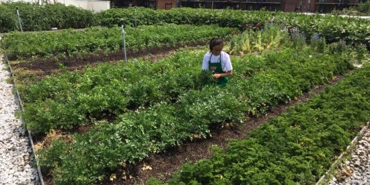 Montreal supermarket offers fresh produce from its rooftop garden