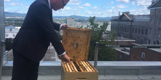 Simons department stores' rooftop beehives designed to help bee populations