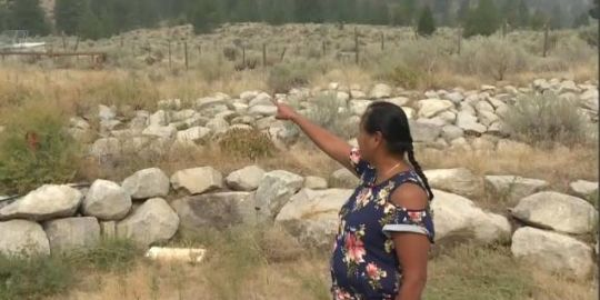 'Our community is angry, our ranchers are angry': Cawston-area ranchers lament cattle loss to Snowy Mountain wildfire