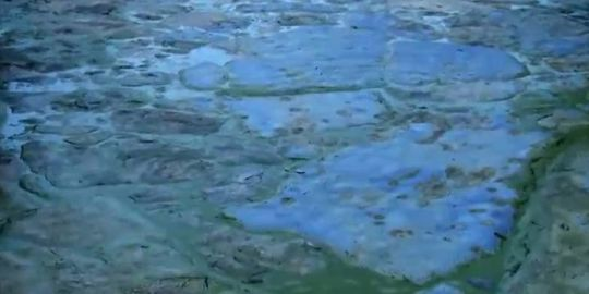 'The algae can cause nerve and liver issues': Kingston Health issues advisory