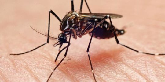 Health unit warns residents after mosquitoes in Alliston test positive for West Nile