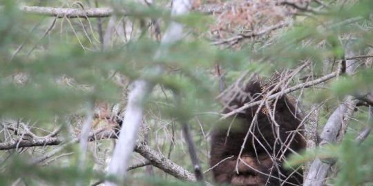 B.C. Bigfoot lawsuit a big waste of time, critics say