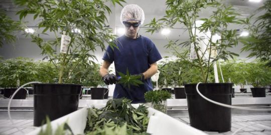 Constellation Brands invests $5B to increase stake in marijuana producer Canopy Growth
