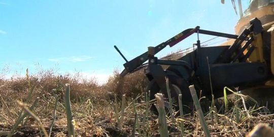 Hot, dry weather good and bad news for Saskatchewan farmers