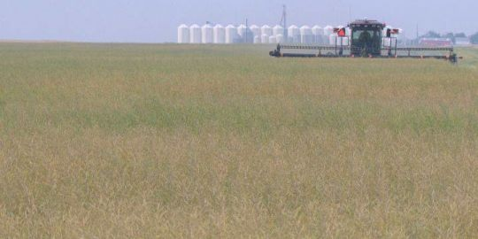 Alberta farmers making tough decisions about whether to buy new equipment because of U.S. tariffs