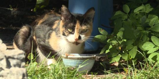 Residents say the feral cat population continues to grow in Village of Bath