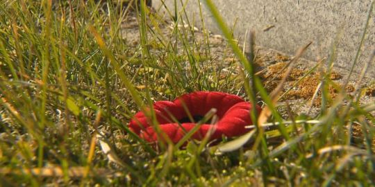 Polish students hold 2nd No Stone Left Alone ceremony for Canadian WWII soldiers