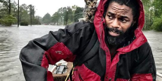 Drenched kitten named 'Survivor' clings to owner amid Florence flood rescue