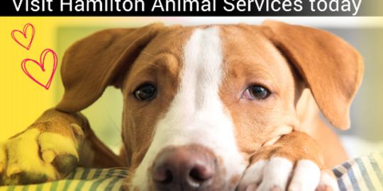 Hamilton launches animal adoption program