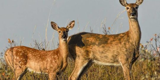 Free testing aims to monitor the spread of CWD in Saskatchewan